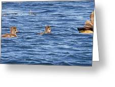 Family Geese Greeting Card