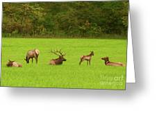 Family Get Together Greeting Card
