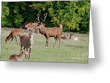 Family Group Greeting Card