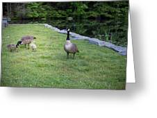 Family Of Geese Greeting Card