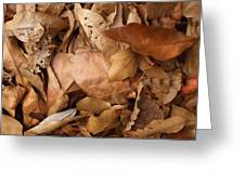 Family Of Leaves Greeting Card
