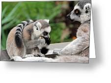 Family Of Lemurs Greeting Card