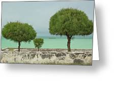 Family Of Trees. Greeting Card