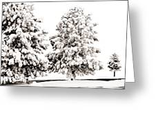 Family Of Trees Greeting Card