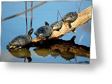 Family Of Turtles Greeting Card