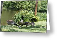 Family Outing Of Geese Greeting Card