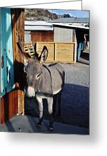 Famous Route 66 Burro Greeting Card