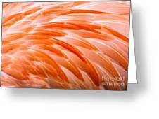 Fan Of Feathers Greeting Card