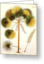 Fan Palm Greeting Card