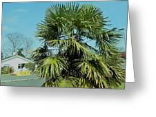 Fan Palm Tree Greeting Card