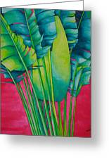 Fan Palm With Pink Greeting Card