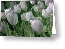 Fanciful Tulips In Green Greeting Card