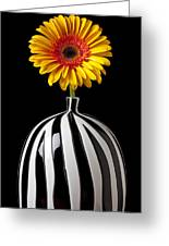 Fancy Daisy In Stripped Vase  Greeting Card