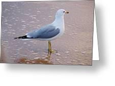 Fancy Gull Greeting Card