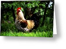 Fancy Rooster Greeting Card