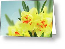 Fancy Spring Narcissus Garden  Greeting Card