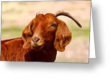 Fancy The Red Goat Greeting Card