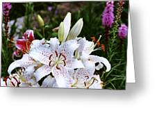 Fancy White Lily In Garden Greeting Card