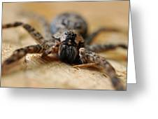Spider Close Up Greeting Card