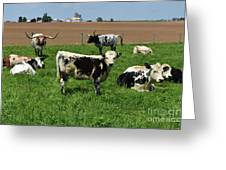 Fantastic Farm On A Spring Day With Cows Greeting Card