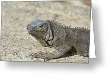 Fantastic Gray Iguana With Spines Along His Back Greeting Card