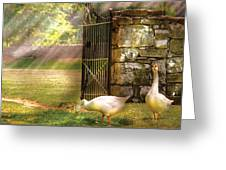 Farm - Geese -  Birds Of A Feather Greeting Card