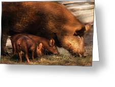 Farm - Pig - Family Bonds Greeting Card