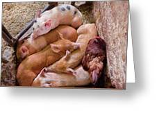 Farm - Pig - Five Little Piggies And A Chicken  Greeting Card