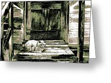 Farm Cat Greeting Card