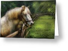 Farm - Horse - White Stallion Greeting Card
