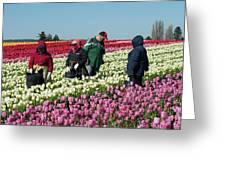 Farm Workers In Tulips Greeting Card