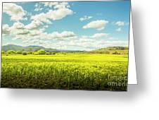 Farmland Colour Greeting Card