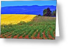Farmlands Of The Willamette Valley Greeting Card