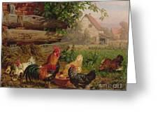 Farmyard Chickens Greeting Card