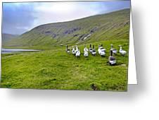 Faroes Geese Greeting Card