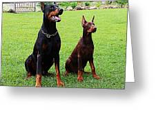 Father Amp Son Ultimo And Czar Greeting Card