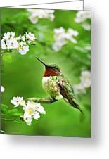 Fauna And Flora - Hummingbird With Flowers Greeting Card