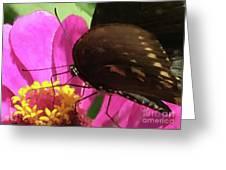 Favorite Dive Greeting Card