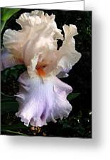 Favorite Iris Greeting Card