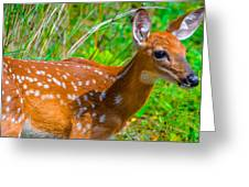 Fawn 4 Greeting Card