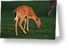 Fawn At Dusk Greeting Card