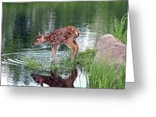 Fawn At The Water Hole Greeting Card