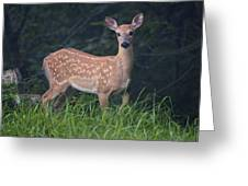 Fawn Doe Greeting Card