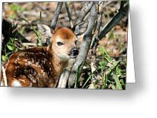 Fawn Face Greeting Card