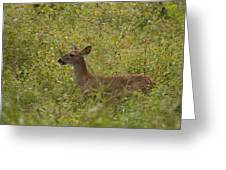 Fawn In A Field Of Flowers Greeting Card