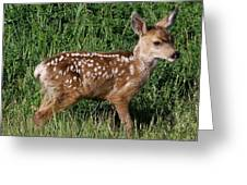 Fawn In The Open Greeting Card