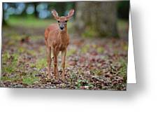 Fawn In Woods At Shiloh National Military Park Greeting Card