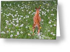 Fawn Memories Greeting Card