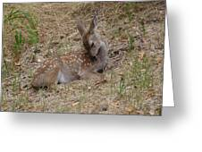Fawn Resting Greeting Card