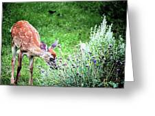 Fawn Visits Flowers Greeting Card